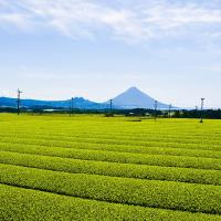 開聞岳の麓に広がる全国的に有名な知覧茶畑