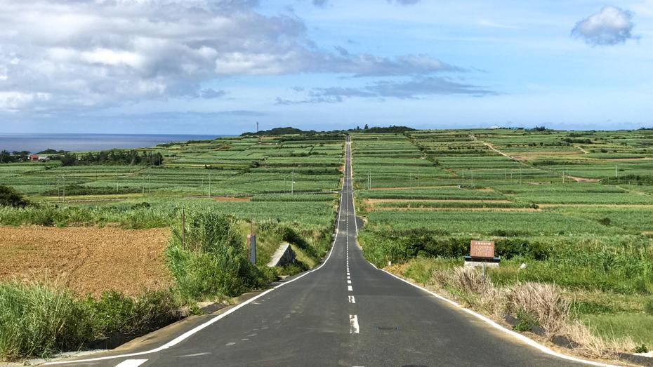 喜界島-サトウキビ畑の一本道