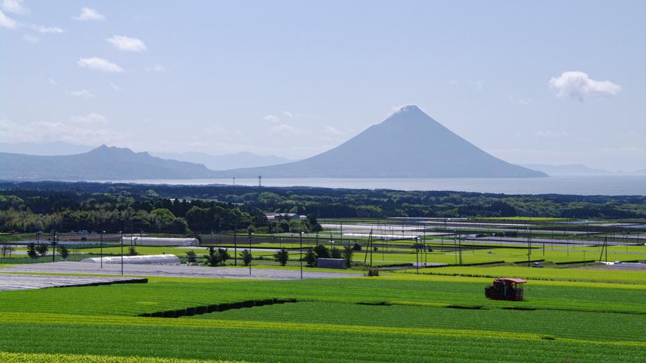 南九州-全国的に有名な知覧茶畑